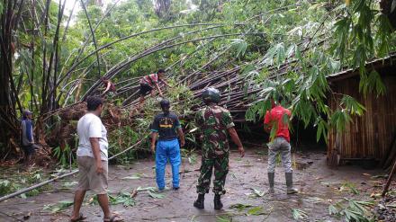 Tim Gabungan Evakuasi Pohon Tumbang Menimpa Rumah Warga Desa Sumbermulyo